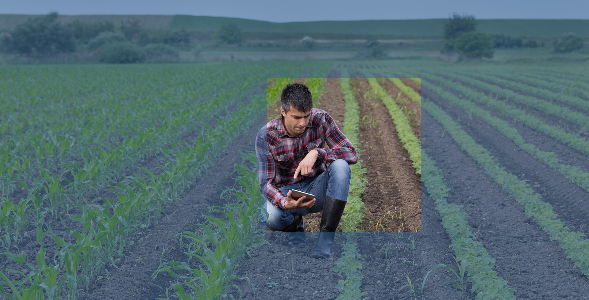 Farmer looking at seedlings with tablet in hand